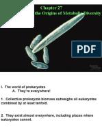 Lecture 10 - prokaryotes