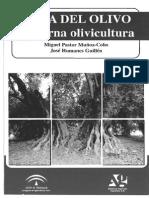 Poda Del Olivo Moderna Olivicultura 5 Edicion