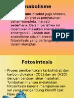 Fotosintesis (Anabolisme)