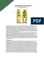 La Anatomía Comparada de Los Animales y Alimento