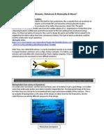 week 3 fastfish