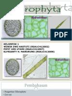 Chlorophyta 1