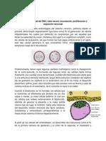 Lectura_Desarrollo Prenatal SNC 1