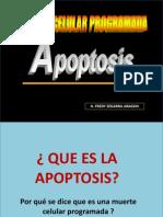 Apoptosis Diapositivas 2011