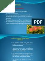 arboles frutales (1)