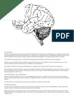 anatomy of brain