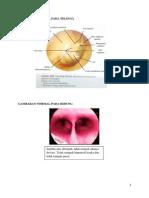 Terjemahan Gambaran Patologis Pada Telinga