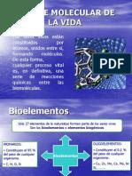 Exposicion Base Molecular