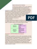 Anatomía Aparato Reproductor Femenino