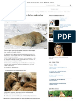 5 Mitos Sobre El Sueño de Los Animales - BBC Mundo - Noticias