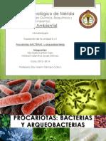 Bacterias y Arqueobacterias