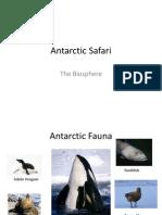 antarctic safari