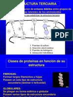proteinas terciarias