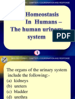 51717821 Biology Form 5 the Human Urinary System