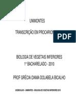 Transcrição Em Procariontes 2010