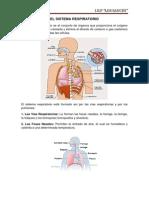 El Sistema Respiratorio Sauces