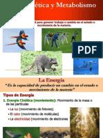 Energia Enzimas y Metabolismo