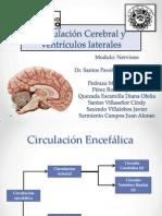 Circulación Cerebral y Ventrículos Laterales
