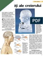 Activităţi ale creierului