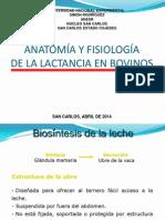 Anatomía y Fisiología de La Lactancia en Bovinos (Eddy Mar)
