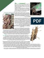 Locuste 1