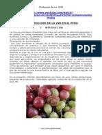 Produccion Uva Peru