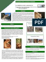 A História Da Suçuarana (Puma Concolor) Em Salvador