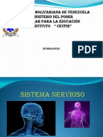 Diapositiva Sistema Nervioso