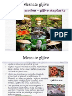 p1.9.1.Mesnate Gljive