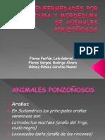 Enfermedades Por Picadura y Mordedura de Animales Ponzoñosos