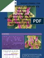 Coloraciones Bacterianas y Medios de Cultivo