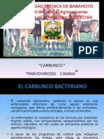 Carbunco Bacteriano y Parvovirosis Canina