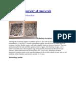 Hatchery & Nursery of Mud Crab