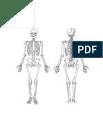 Skelettbild