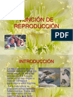 FUNCION DE REPRODUCCIÓN.pptx