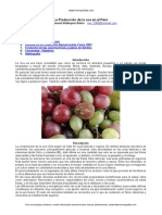 Produccion Uva Perú