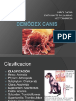 Demódex Canis