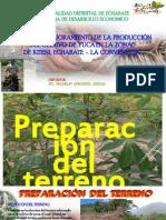 Seleccion de Plantas Medre, Plantacion.