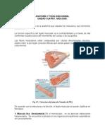 Sistema Muscular de Animaless