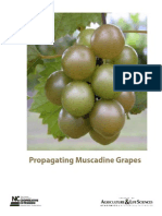 Propagating Muscadines