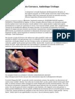 Dott. Antonio Corvasce, Andrologo Urologo