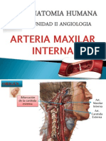 Arteria Maxilar y Temporal Superficial