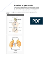 Glandele suprarenale