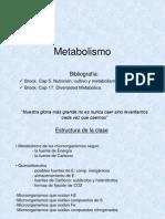 2f-metabolismo2