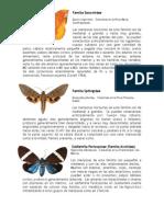 Tipos de Mariposa Guatemala
