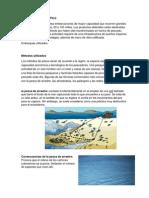 Pesca Industrial en El Perú