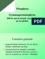 Caracteristici gimnosperme