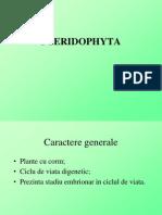 Pteridofite