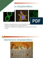 5MembranaCitoplasmatica_26632