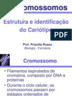 2+Cromossomos+e+cariótipo